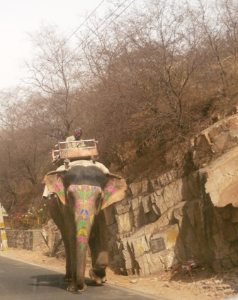 It's considered lucky to see an elephant in India.  We saw 20!