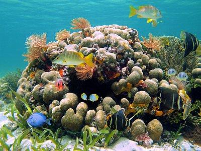 Sealife in Dominica