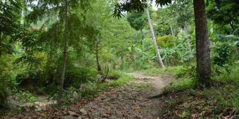 La Visite National Park- biodiversity in Haiti