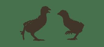 Πουλερικά Φυτικής Εκτροφής