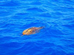 Snorkel-en-schildpadden-in-griekenland