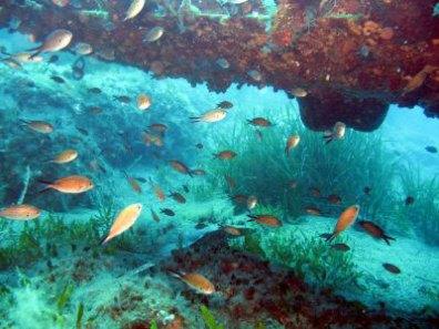 Leren duiken tijdens vakantie op Kreta