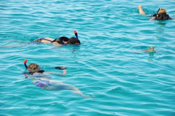 Ausflugs-Check: Schwimmen mit Meeresschildkröten auf Barbados