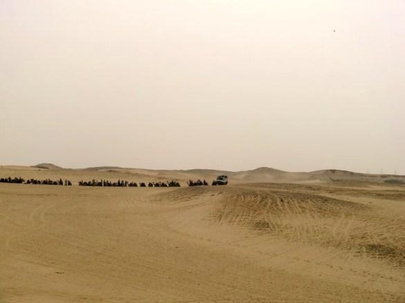 Ausflugs-Check: Typisch Ägypten: Kamele, Jeeps & Pyramiden