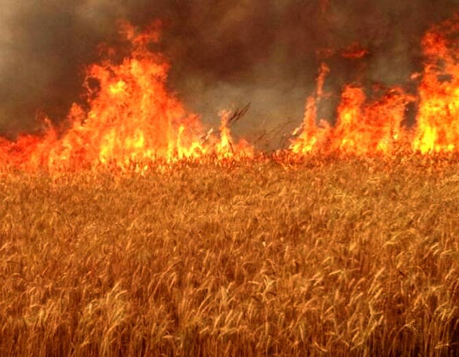 wheat crop fire in india