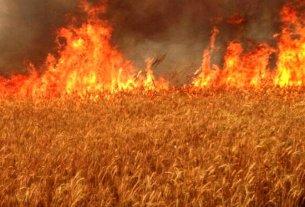 wheat crop fire in india