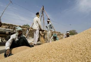 रिकॉर्ड उत्पादन के बावजूद, भारत को अभी भी हो सकती है गेहूं आयात की जरूरत
