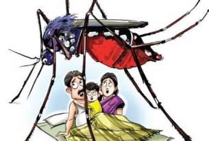 इन घरेलू नुस्खों से पाइए मच्छरों से छुटकारा