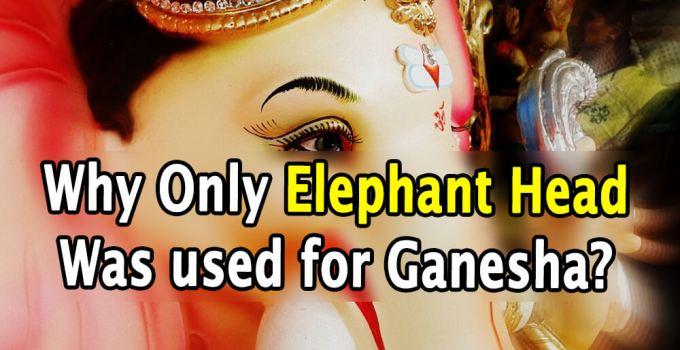 Why Elephant Head was Used as Ganesha Head - Krishna Kutumb