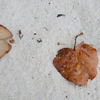 Leaf on white sand