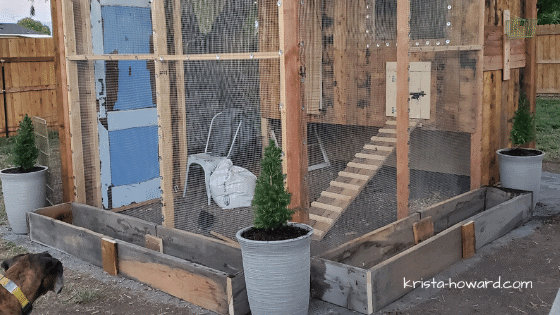 DIY Chicken Coop for 6 Chickens