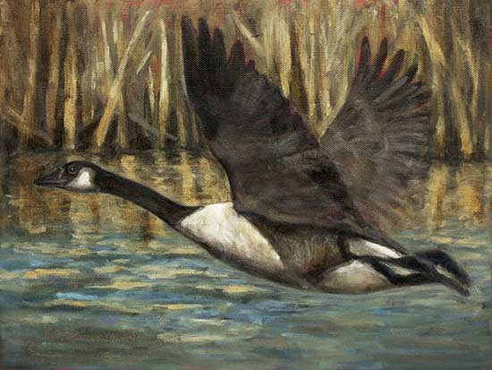 Canada Goose painting update 2 oil by Krista Hasson