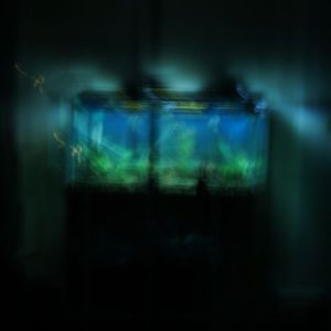 Advice to the Future: A very out of focus image of a fish tank at night.