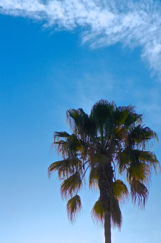 Photo of Palm Trees in late afternoon sun in Sunny So Cal by Kristen Koster on Flickr.com