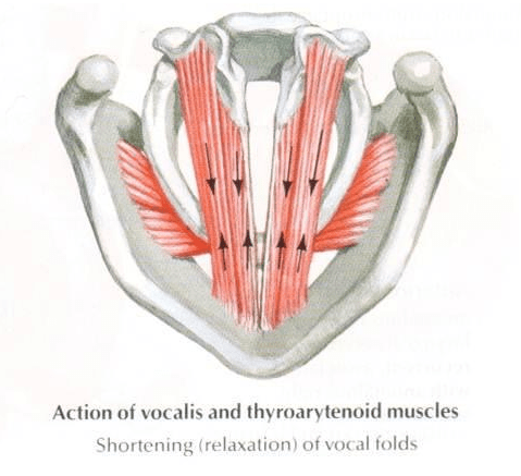 An Introduction to Understanding Head Voice and Chest Voice ...