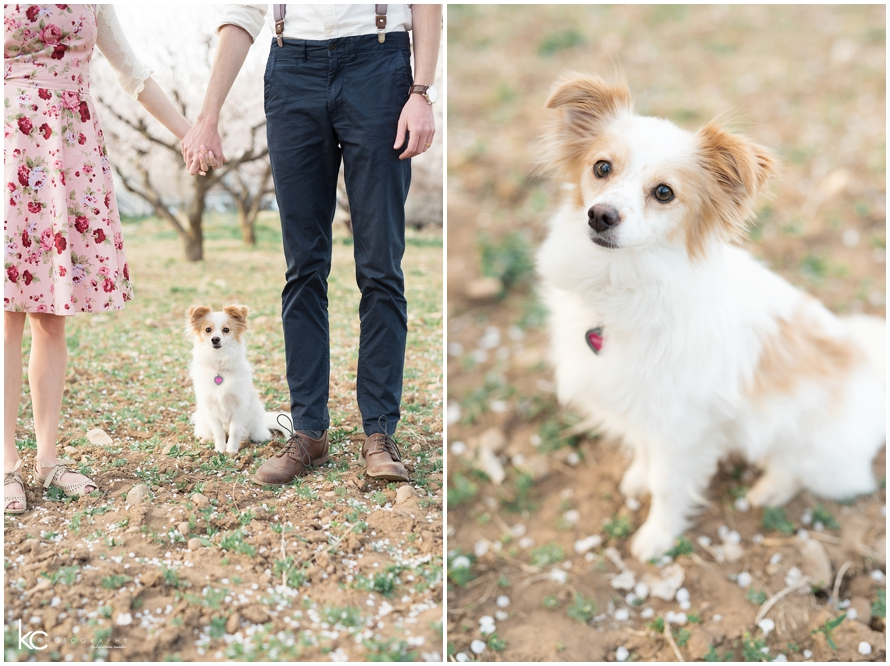 Engagements Utah Blossoms | Kristina Curtis Wedding Photographer