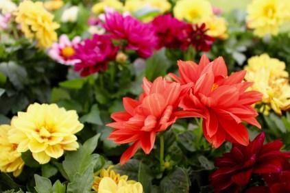 community-event-salisbury-in-bloom-7