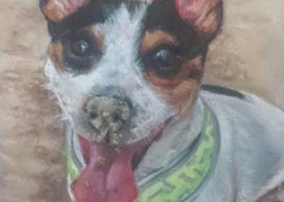 Hugo – pastel on paper