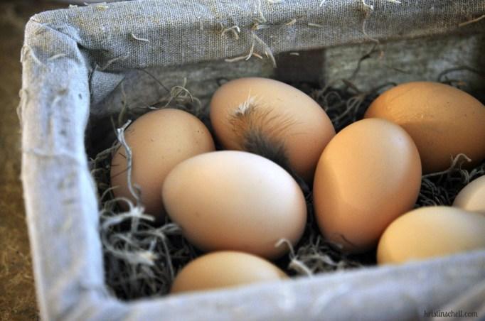 52 SS Cooking Class - eggs WM
