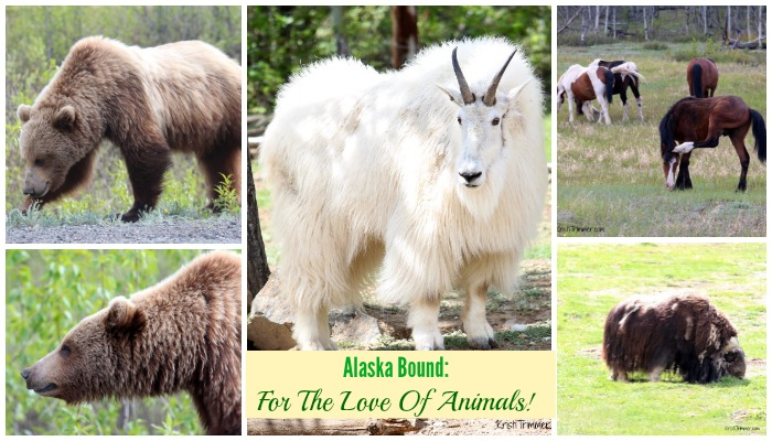 Alaska Bound For the Love of Animals
