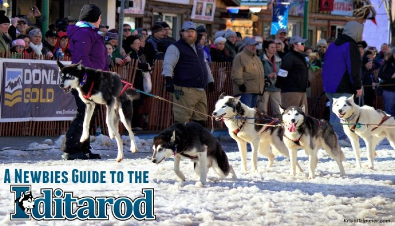 Newbies Guide to the Iditarod - feature