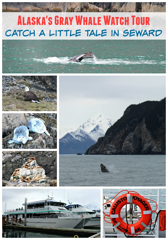 Alaska's Gray Whale Watch Tour