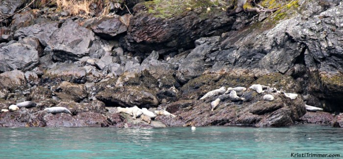 KFT - Harbor Seal Party