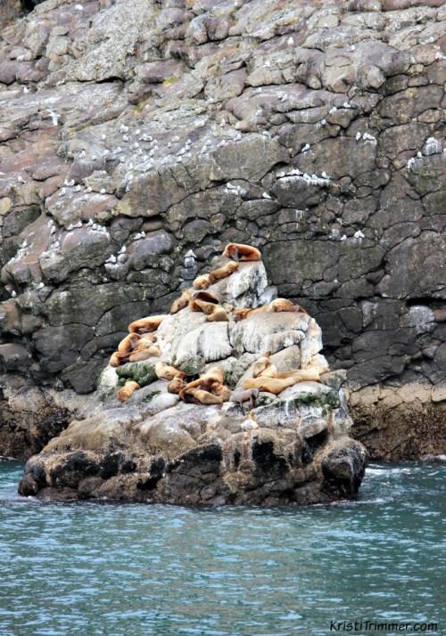 KFT - Stellar Sea Lions