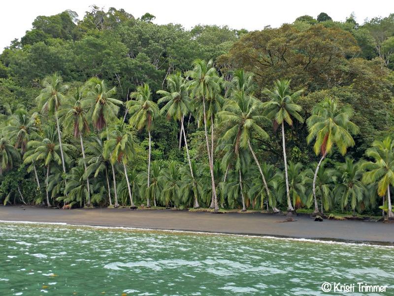 Costa Rica_Palm Trees