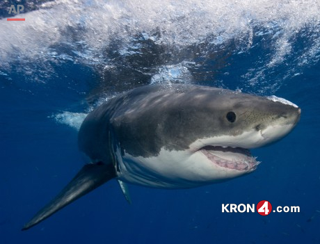 Shark_198807