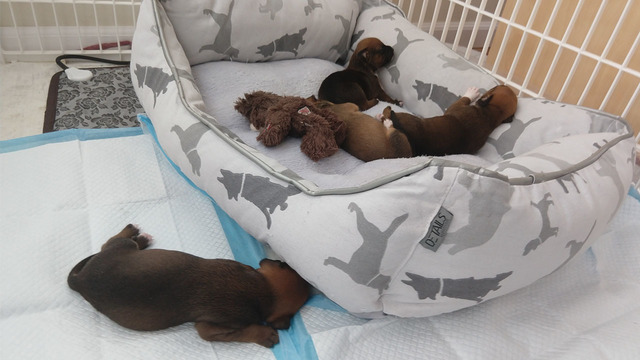 LIVE PUPPY CAM: Dog gives birth after being rescued from