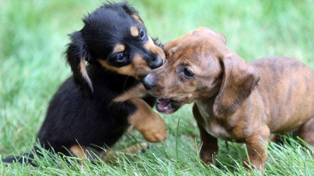 pet-puppies-job_1541333047883_61127030_ver1.0_640_360_1541368850772.jpg