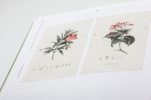 kronecker-wallis-humboldt-illustrations-book-02