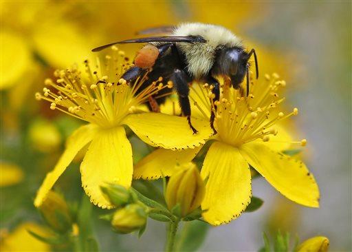 Pollinator Decline_321547