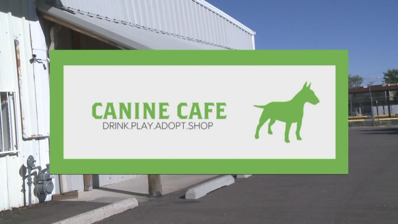 Canine Cafe_452232