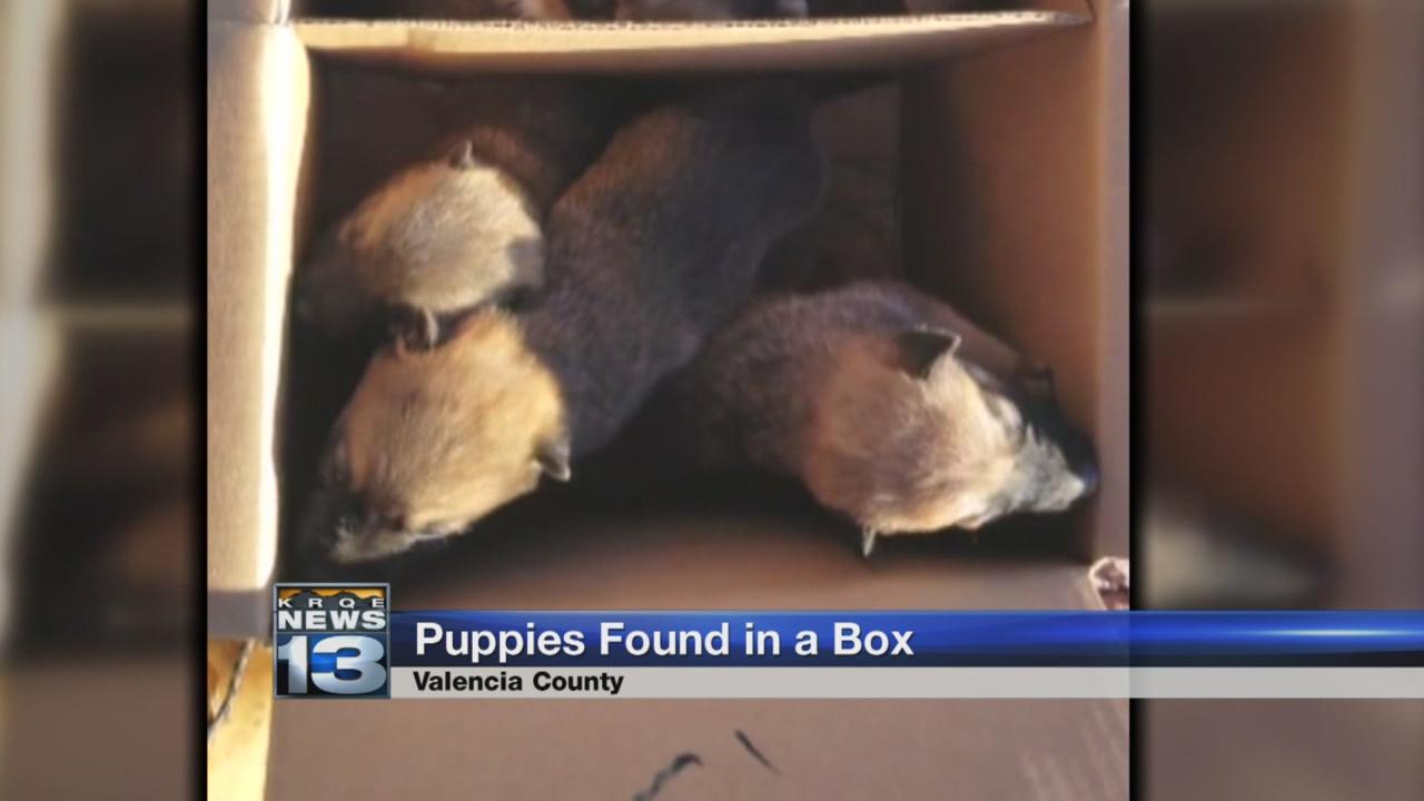 puppies found_784329
