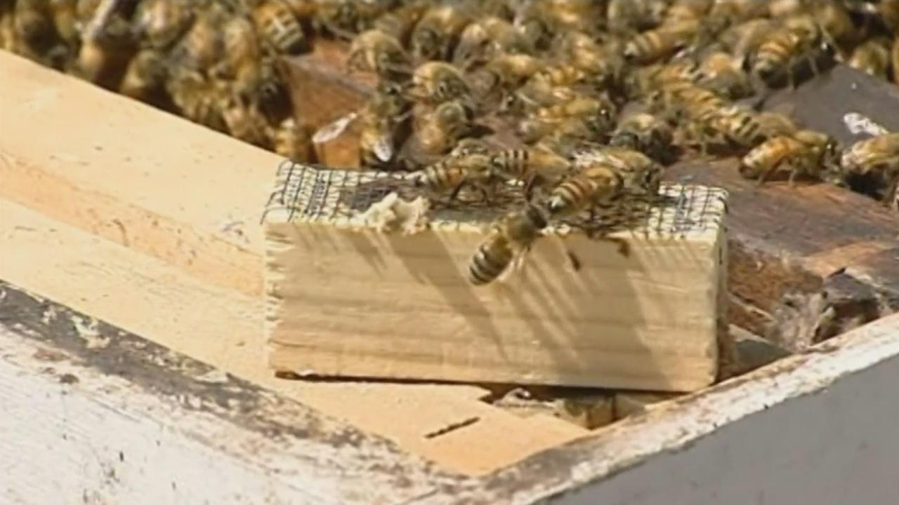 busy bees_1528411278566.jpg.jpg