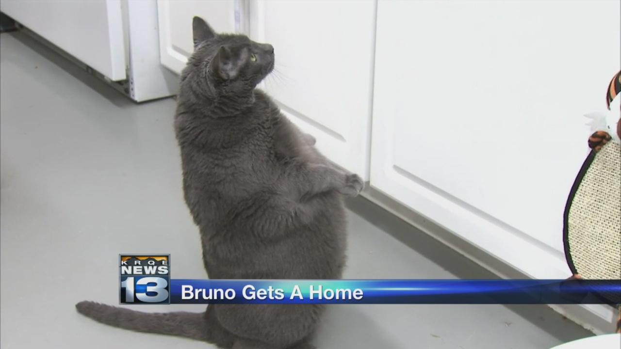 bruno_1535034199086.jpg