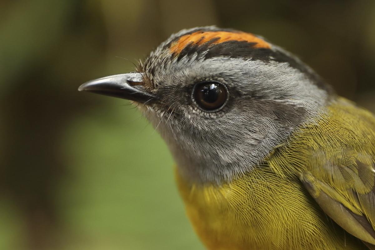 Mountaintop_Bird_Extinction_73872-159532.jpg27148429