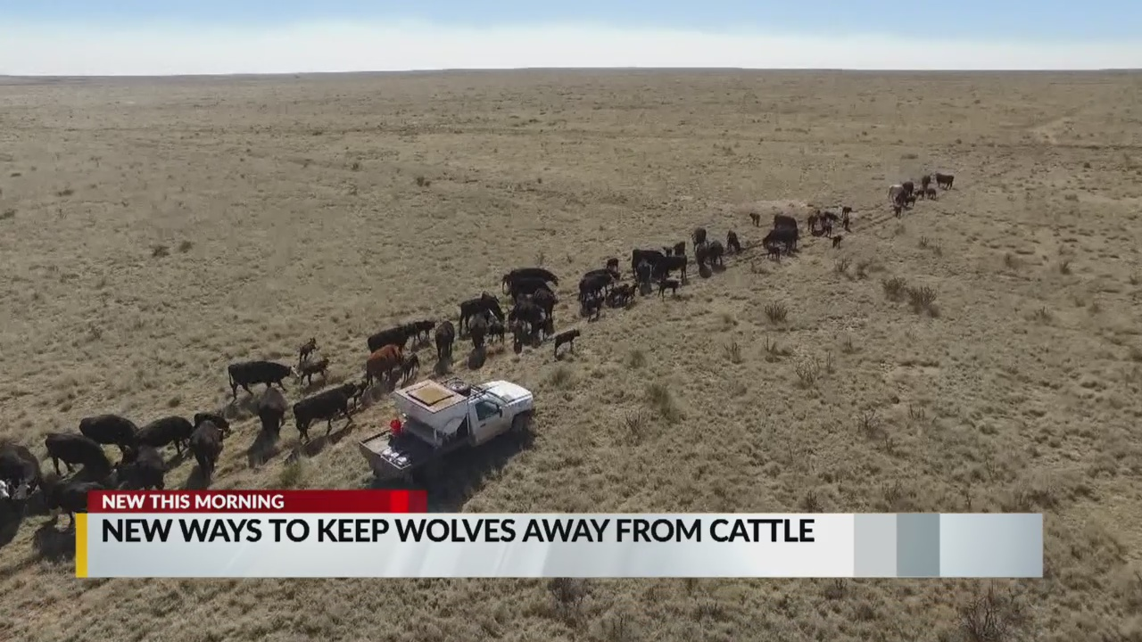 keep cattle safe_1545052674816.jpg.jpg