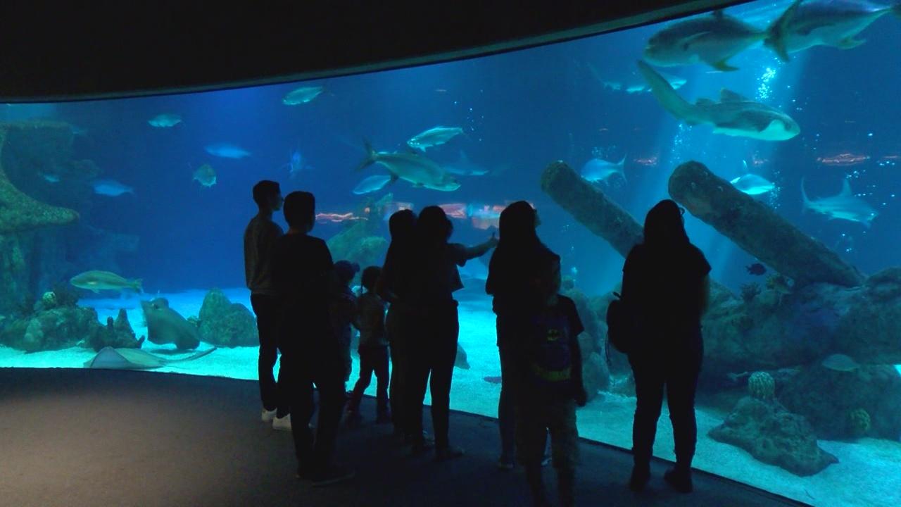 BioPark shark tank_376376