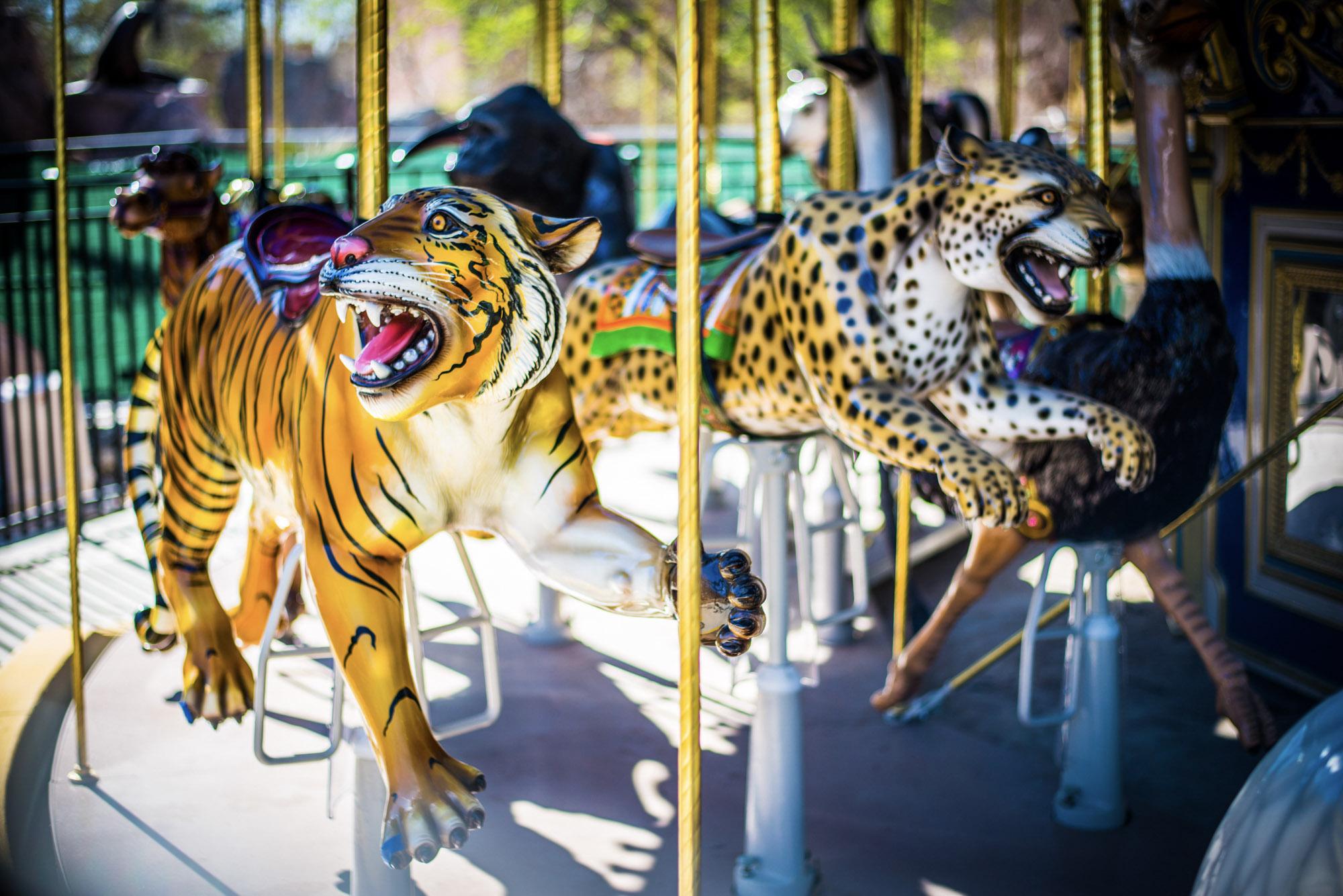 carousel_Conrad Doborski_1558544921072.jpg.jpg