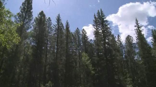 santa fe national forest stock_1520202249029.jpg.jpg