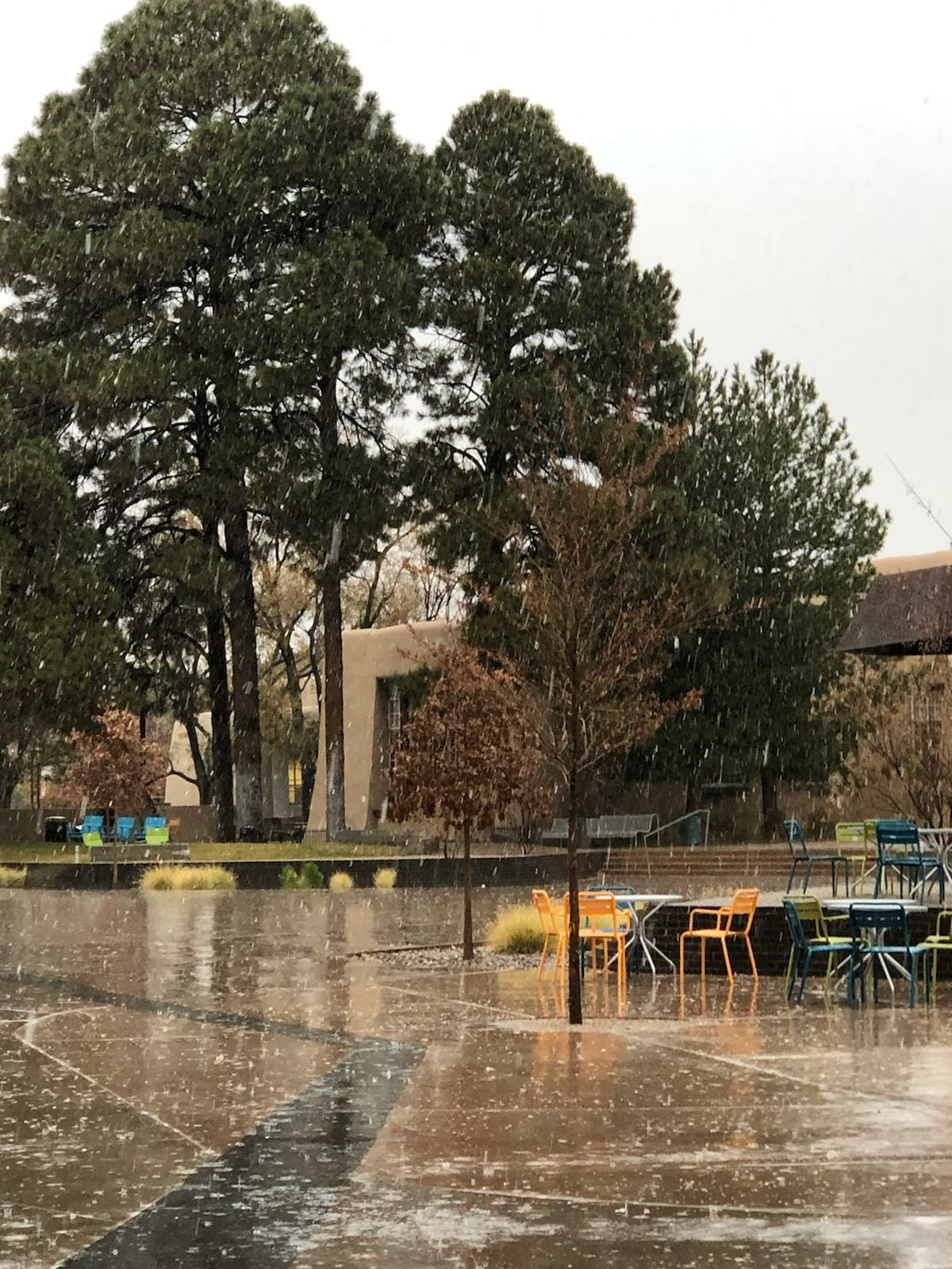 Snowing on UNM Campus November 21, 2019