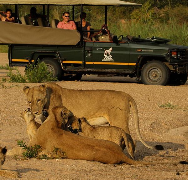 Jock Safari Lodge Lions in River Bed