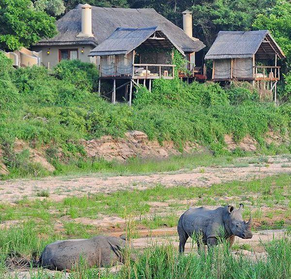 Jock Safari Lodge Rhino Near Lodge