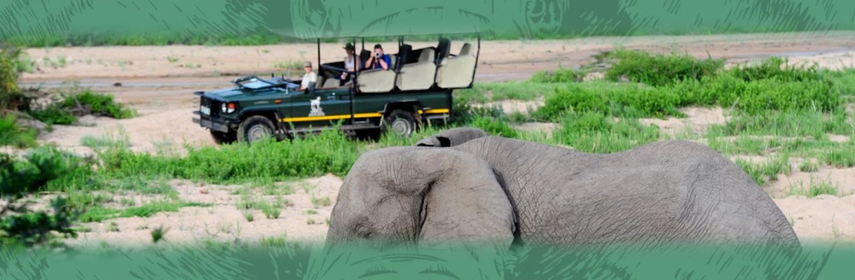 Jock Safari Lodge Wildlife Game Drive