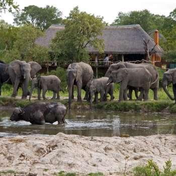Simbambili Game Lodge Wildlife