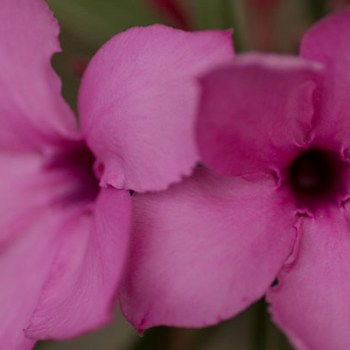 Lukimbi Lodge Flora