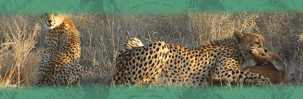 Lukimbi Lodge Wildlife Leopards
